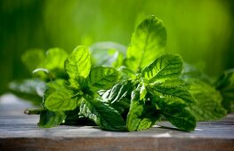 Fresh mint in the garden on a wooden board