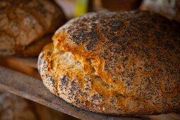 Freshly baked poppy seed bread on a wooden shelf