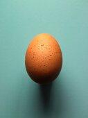 A brown egg from a Sulmtaler hen