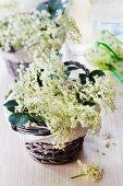 Elderflowers in baskets