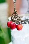 Cherries hanging on an ice bucket