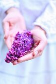 Hands holding purple lilac flower