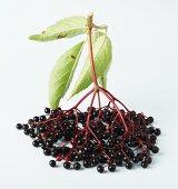 Elderberries with leaves