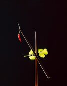 Chopsticks with a chilli and coriander leaves against a black background