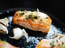 Salmon in a frypan, Sweden.