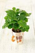 A coffee plant in a coffee mug