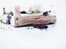 Elderberries on newspaper in a crate