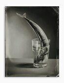Mackerel in a water glass