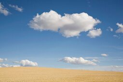 Wheat Fields and Puffy Clouds