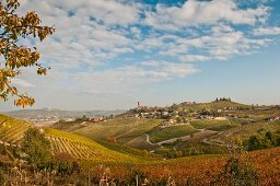 Hillside Village and Vineyard, Barbaresco, Italy