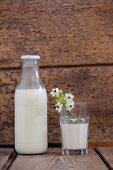 Bottle of milk and Star-of-Bethlehem flowers in glass of milk against wooden wall