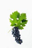 Cabernet Sauvignon grapes with a vine leaf