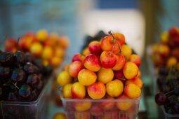 Rainier cherries