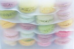 Layers of macaroons separated by sheets of paper in a plastic box