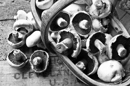Field mushrooms in a wooden basket (black and white image)