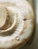 A freshly washed mushroom (close-up)