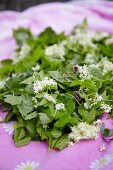 Fresh wild herbs and flowers for a wild herb dish