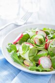 Cucumber salad with radishes and rocket