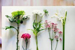 Various flowers in a row on a white surface