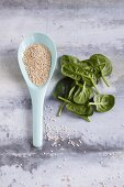 Quinoa on a spoon and fresh spinach leaves