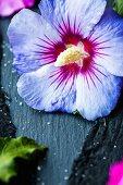 Candied hibiscus petals
