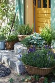 Mediterranean herbs in planters on the stone steps in front of a yellow wooden door
