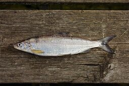 A whitefish on a wooden board