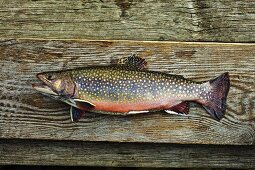 Brook trout on a wooden board