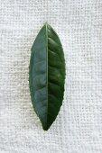 A tea leaf