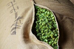 Beer hops in a jute sack