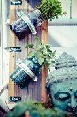 Holzbrett mit Einmachgläsern als Pflanzenhalter, daneben Buddhakopf