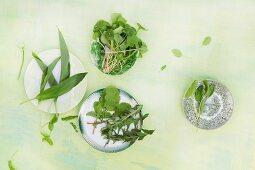 Wild garlic, purslane, radish leaves, dandelions and sorrel