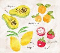 An arrangement of fruit featuring papaya, apricots, mango and mangosteens (illustration)