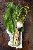 Zutaten für saure Gurken: Meerrettichwurzel und Blätter, Knoblauch, Dill