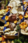 Assorted mushrooms in wooden baskets with blue paper