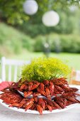 Crayfish in white dishes decorated with bunch of dill on garden table for crayfish festival
