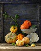 Various pumpkins against a wooden wall