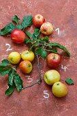 Five types of apples – 1 Royal Gala, 2 Evelina, 3 Cox Orange, 4 Braeburn, 5 Jonagold