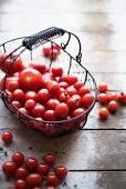 Tomaten in einem Drahtkorb