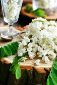 Flowers of false acacia on tree stump and in glass