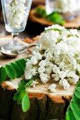 Akazienblüten auf Baumstamm und in Glas