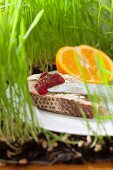 A sliced of bread spread with jam and served with half an orange on grass