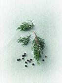 Juniper berries and juniper sprigs