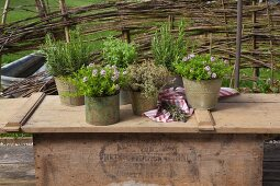 Various herbs in vintage containers on wooden surface outdoors