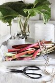 A bunch of fresh rhubarb stalks on a vintage table