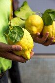 A man holding freshly picked lemons