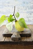 A quince on a twig with leaves on a wooden board