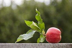 A freshly harvested apple