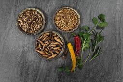 Crickets, grasshoppers and meal worms in bowls