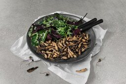 Fried grasshoppers and a mixed leaf salad on a metal plate